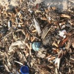 Cigarette butts bad news for the Bay