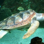 Close encounter of the turtle kind