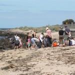 Seashell safaris – spot something special!