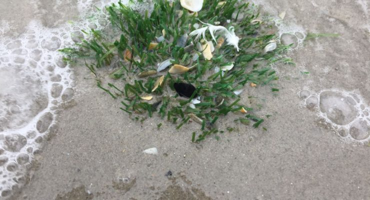 Fake grass on St Kilda shoreline. Pic: Baykeeper